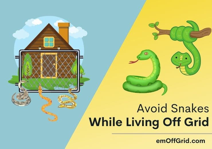 Avoid Snakes While Living Off Grid