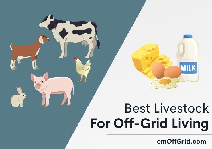 Best Livestock For Off-Grid Living