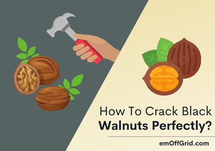 How To Crack Black Walnuts