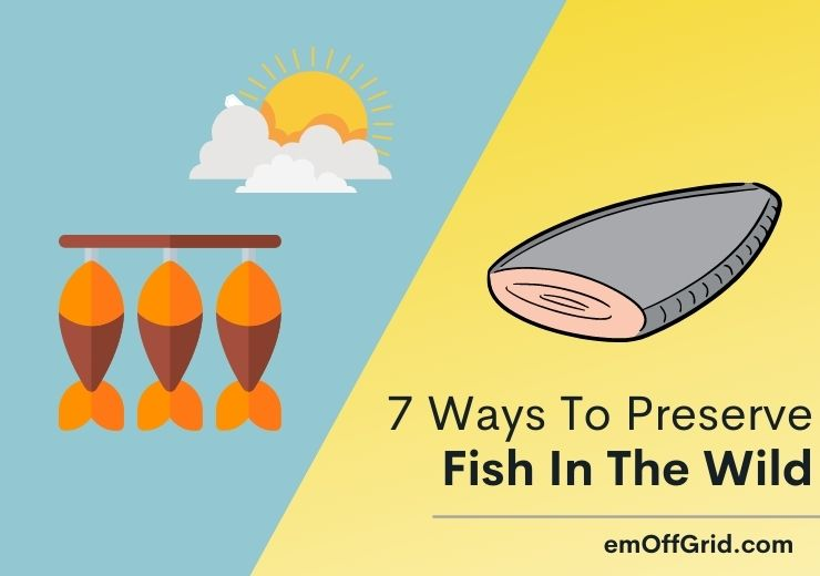 7 Ways To Preserve Fish In The Wild