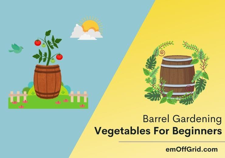 Barrel Gardening Vegetables For Beginners