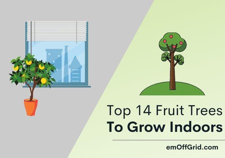 Top 14 Beautiful Fruit Trees To Grow Indoors