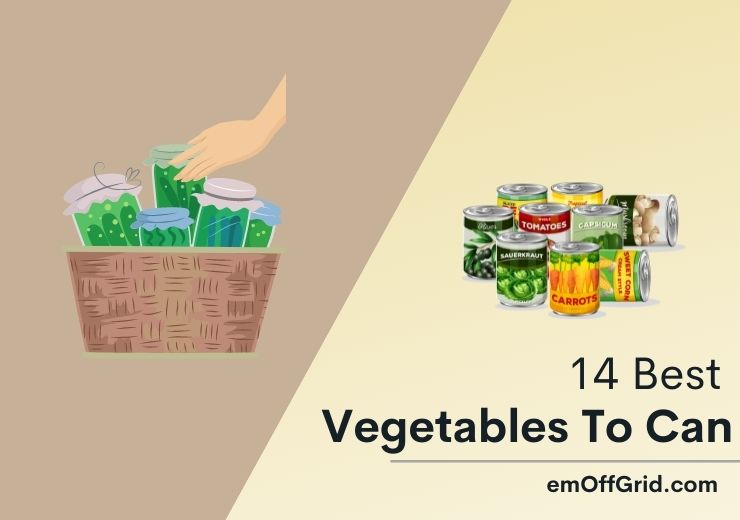 Best Vegetables To Can