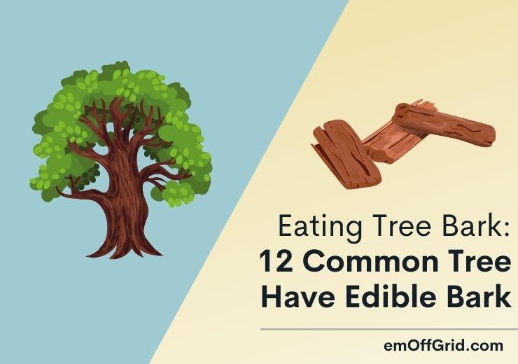 Eating Tree Bark 12 Important Common Tree Have Edible Bark
