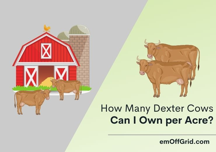How Many Dexter Cows Can I Own