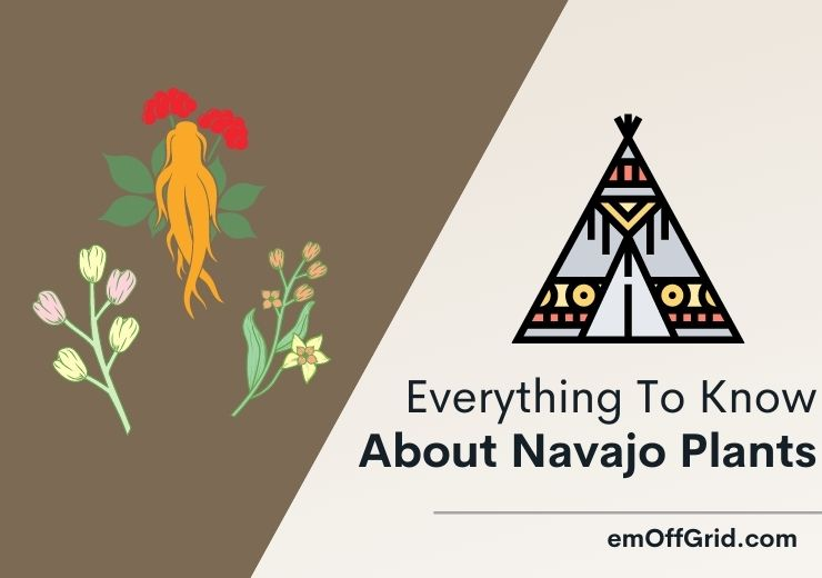 Navajo Plants - Everything To Know About Navajo Plants