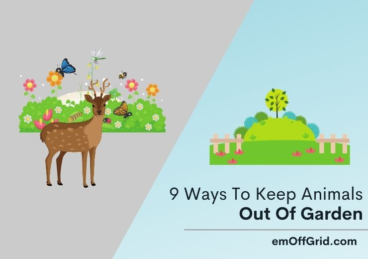 Ways To Keep Animals Out Of Garden
