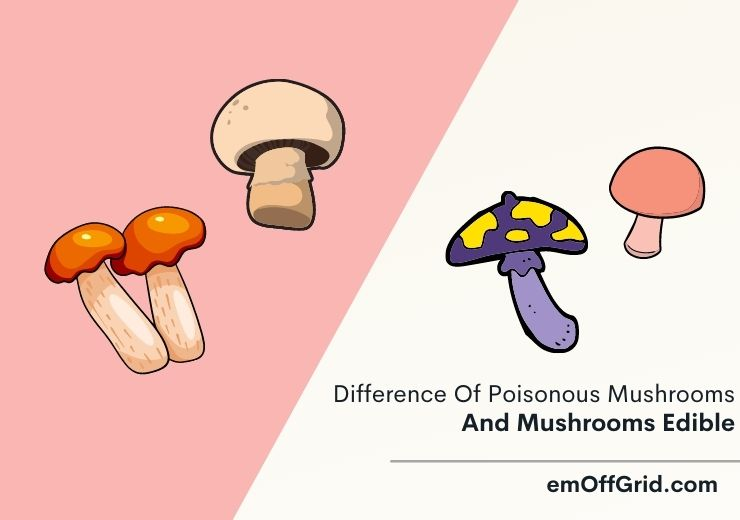 Difference Of Poisonous Mushrooms And Mushrooms Edible